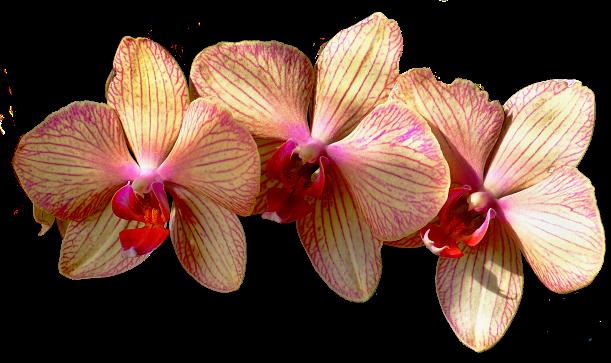 aromaterapia ako