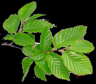 silica aromaterapia